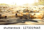 lake full of plastic bottles ... | Shutterstock . vector #1273319665