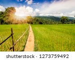 beautiful landscape of rice... | Shutterstock . vector #1273759492