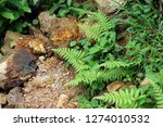beautyful ferns leaves green... | Shutterstock . vector #1274010532