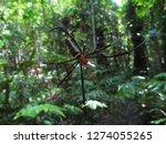 Kalimantan  Borneo  Giant...