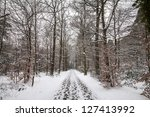 Trail Through A Wintry Snow...