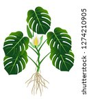 plant with roots  flower and... | Shutterstock .eps vector #1274210905