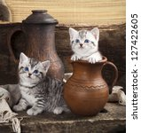 Stock photo british kitten on retro background 127422605