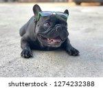 cute french bulldog lying on... | Shutterstock . vector #1274232388