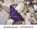 Apatura Metis  Purple Emperor
