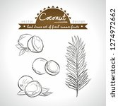 coconut collection of fresh... | Shutterstock .eps vector #1274972662