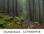Mountain Forest With Stones....