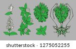 the mint collection. caring...   Shutterstock .eps vector #1275052255