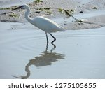 egret reflected on the water  ...   Shutterstock . vector #1275105655