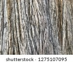 background with trunk of an old ... | Shutterstock . vector #1275107095