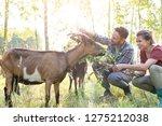 couple feeding goats on grass...   Shutterstock . vector #1275212038