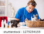 vet doctor examining kittens in ... | Shutterstock . vector #1275254155