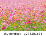soft and select focus a... | Shutterstock . vector #1275281695