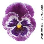 Studio Shot Of Violet Colored...