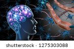 brain nerve cells and nervous... | Shutterstock . vector #1275303088