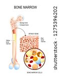bone marrow  yellow  red  and... | Shutterstock .eps vector #1275396202