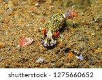 blue yellow nudibranch ... | Shutterstock . vector #1275660652