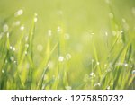 green bokeh out of focus... | Shutterstock . vector #1275850732