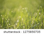green bokeh out of focus... | Shutterstock . vector #1275850735