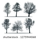 tree silhouettes   birch tree ... | Shutterstock .eps vector #1275944068