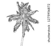 hand drawn illustration of... | Shutterstock .eps vector #1275956872