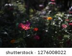 pretty flowers blooming in the... | Shutterstock . vector #1276008022