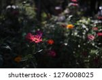 pretty flowers blooming in the... | Shutterstock . vector #1276008025