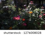 pretty flowers blooming in the... | Shutterstock . vector #1276008028