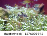 selected focused of small...   Shutterstock . vector #1276009942