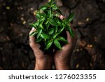 hands holding young plants on...   Shutterstock . vector #1276023355