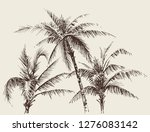 palm trees foliage  tree crown... | Shutterstock .eps vector #1276083142