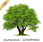 isolated trees on white...   Shutterstock .eps vector #1276094842
