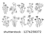 wild flowers. sketch... | Shutterstock .eps vector #1276258372