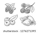 vector illustration of berries... | Shutterstock .eps vector #1276271395