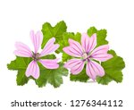 mallow flowers and leaves ... | Shutterstock . vector #1276344112