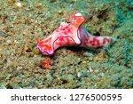 white pink beautiful nudibranch ... | Shutterstock . vector #1276500595