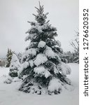pine tree under snow in winter | Shutterstock . vector #1276620352