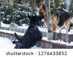 two dogs standing by the fence. | Shutterstock . vector #1276633852