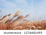dry grass flowers blowing in... | Shutterstock . vector #1276681495