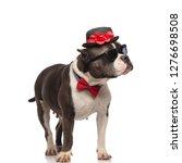 elegant american bully wearing...   Shutterstock . vector #1276698508