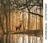 Small photo of Stunning landscape image of still stream in Lake District forest with beautiful mature Red Deer Stag Cervus Elaphus among trees