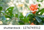 amazing view of bright vibrant... | Shutterstock . vector #1276745512