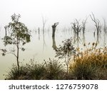 Small photo of Cobby Causeway fog with dead trees, reflections and grasses.