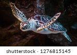 sea turtle swims under water | Shutterstock . vector #1276815145