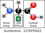 amino acid structure | Shutterstock .eps vector #1276995622