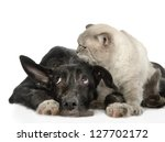 Stock photo the cat lies near a dog isolated on white background 127702172