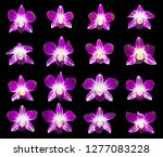 Set Purple Branches Orchids Isolated - Fine Art prints
