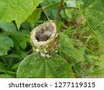 Hummingbird Nest In Costa Rica