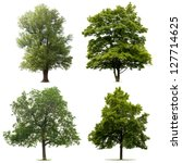 four trees isolated on white... | Shutterstock . vector #127714625