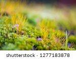 beautiful green moss grown up... | Shutterstock . vector #1277183878